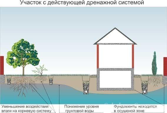 Дренаж на участке – это система из канав и труб, предназначенная для осушения почвы и понижения уровня грунтовых вод.